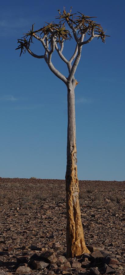 San Africa Holidays and Tours Desert